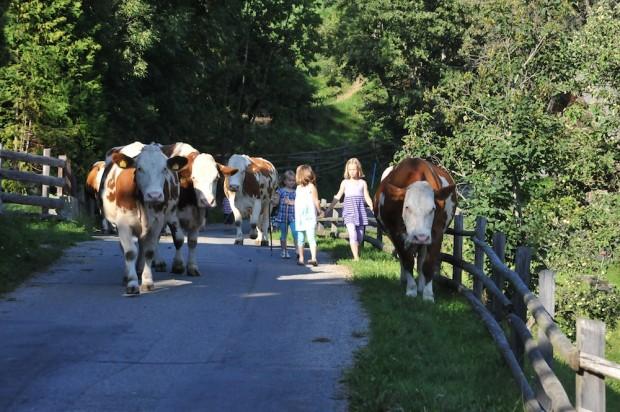 Gemeinsam die Kühe von der Weider holen